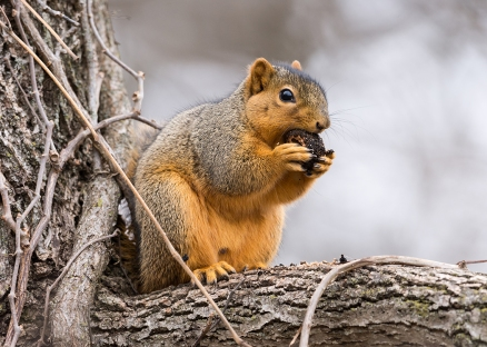 Squirrel Bryan 6